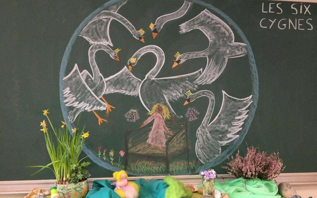 Les six cygnes (Frères Grimm) en classe d'élémentaire